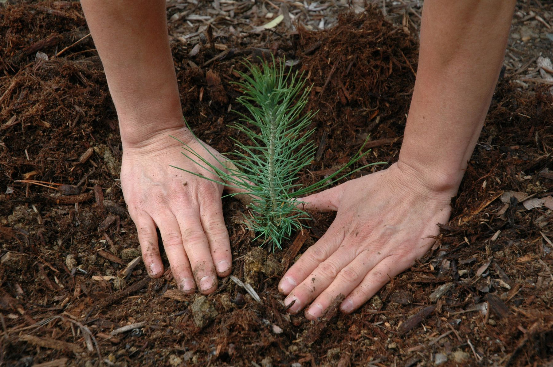 Climate change has become a major issue in today's life. Why not try and actively participate in saving the planet. ...