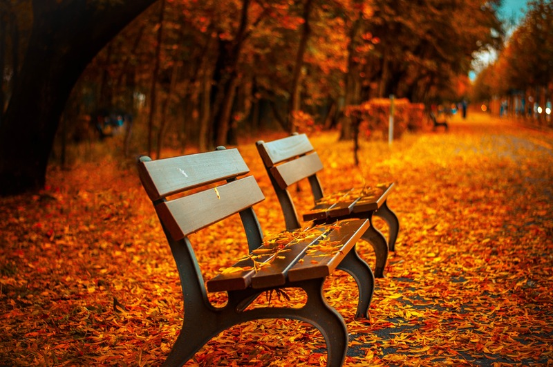 bench in the park orange red autumn leaves