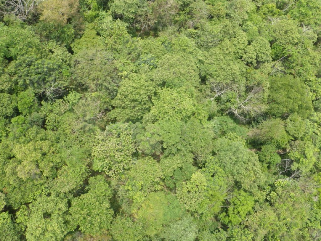 """Drone over forest"" by Lian Pih Koh is licensed under CC BY 2.0"