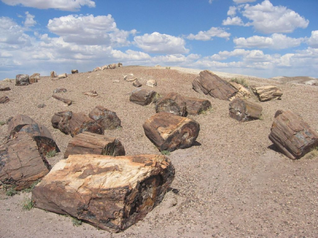 Littering the landscape in Chubut province, southern Argentina, are strange stone monuments to life that thrived up to 65 million ...