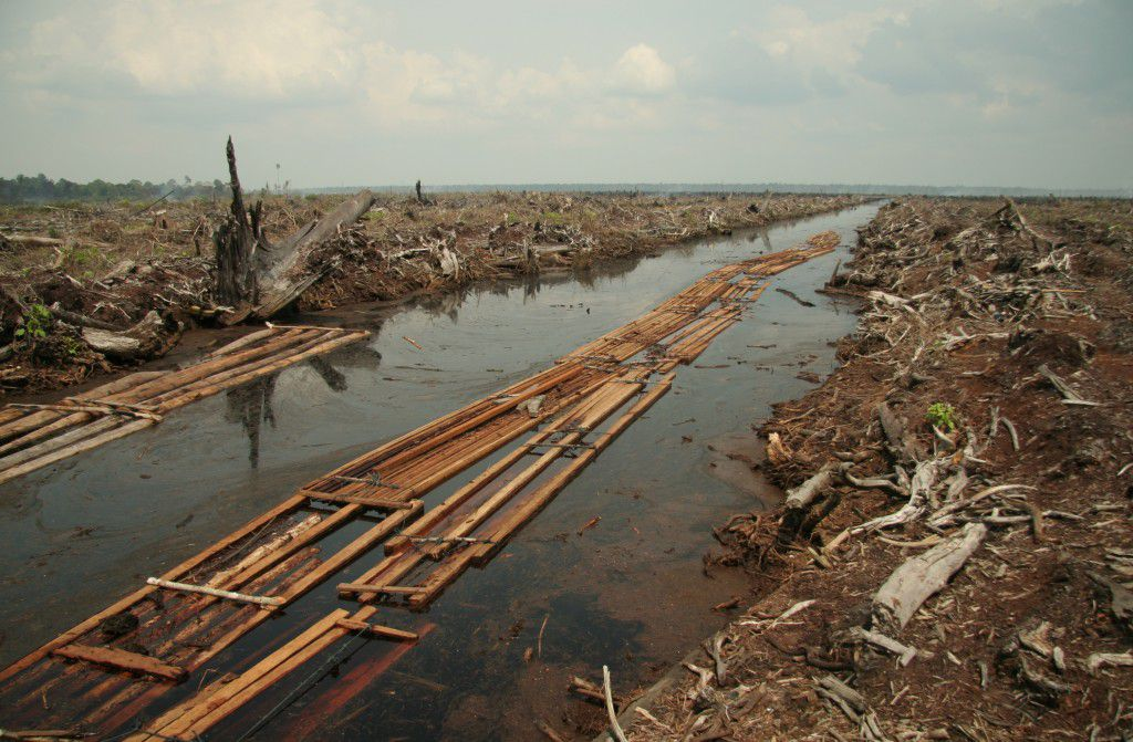 """Remains of Peat forest in Indragiri Hulu, Indonesia, to make way for palm oil plantation"" by Aidenvironment is licensed under CC BY 2.0"