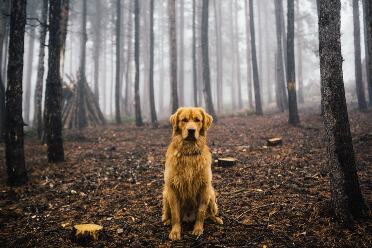 Aspen in the foggy forest. | © Hunter Lawrence