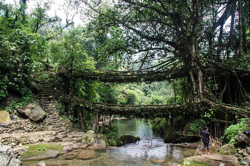 """Living root bridge"" by Ashwin Kumar is licensed under CC BY 2.0"