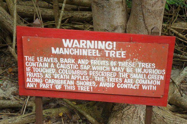 Manchinel tree Warning sign