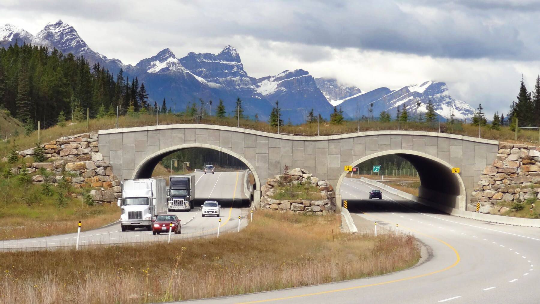 Many animals are killed every year due to road crossing. An animal overpass is essentially a structure that goes over ...