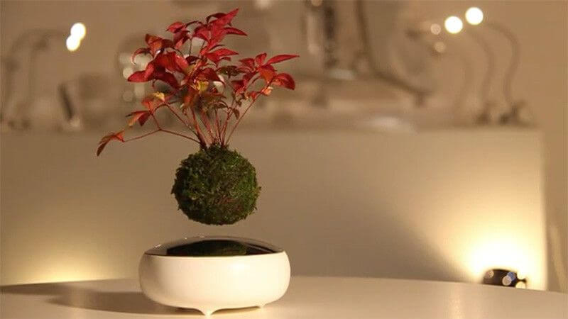 DIY Floating Bonsai Tree