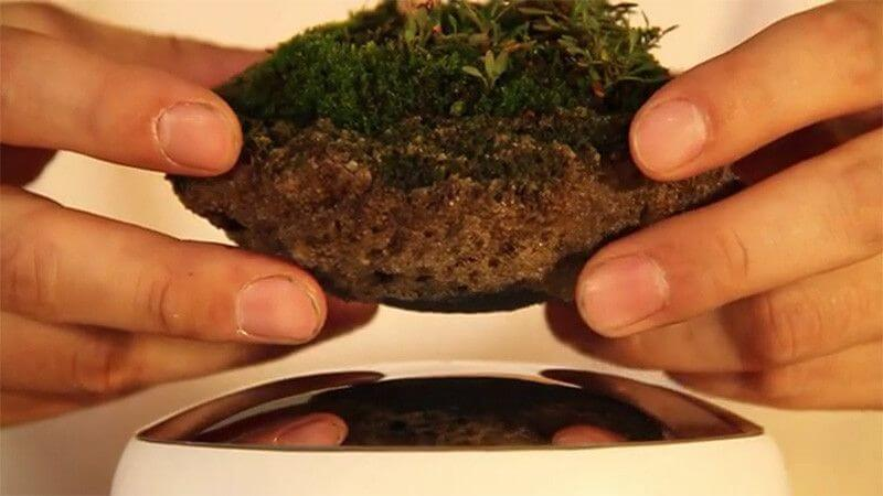 Creating Your Own Floating Bonsai Tree | Woodz
