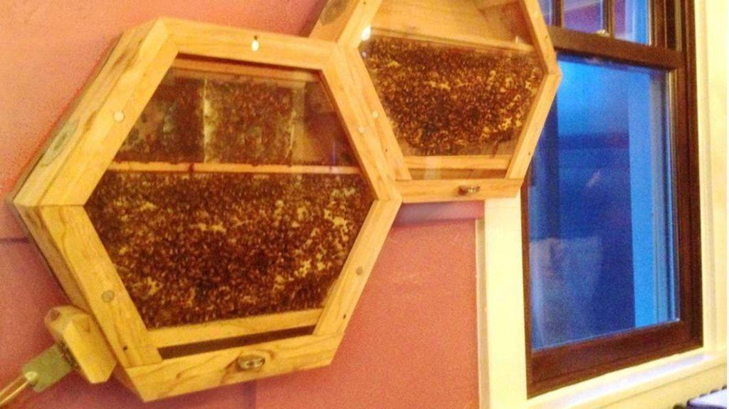 Beecosystem bees as indoor pets (3)