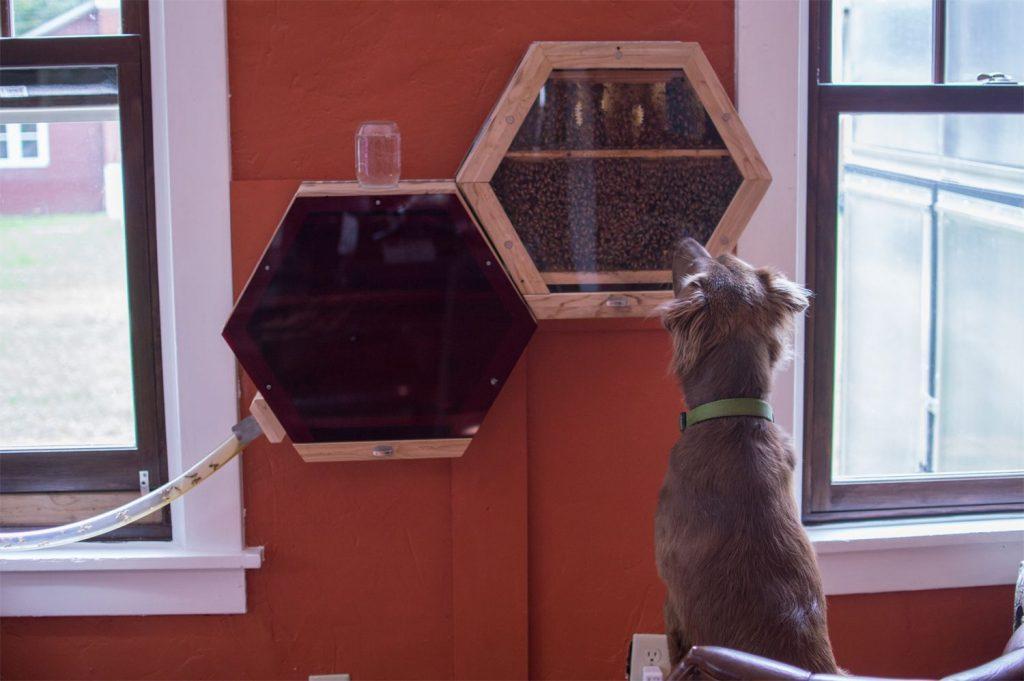 Beecosystem bees as indoor pets