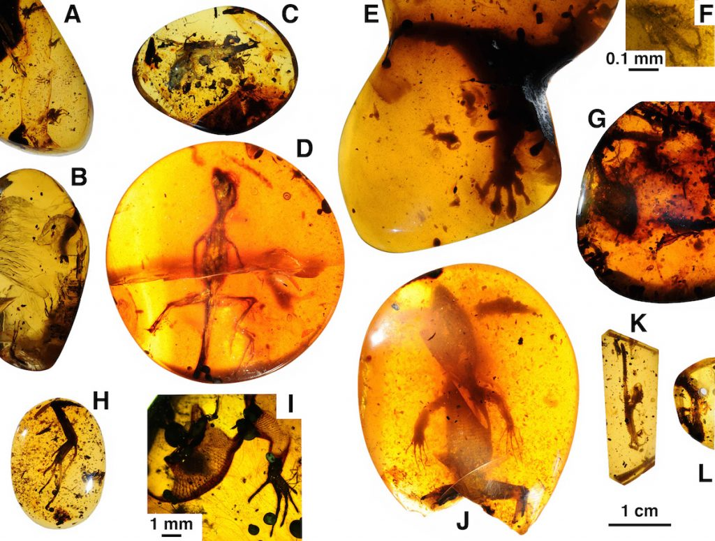 A Dozen Lizards Discovered In Cretaceous-Aged Amber