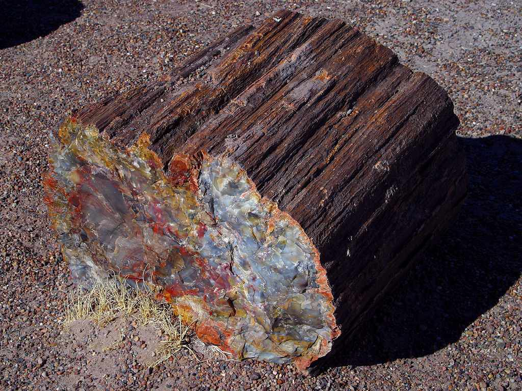 Petrified tree shows scars from prehistoric wildfires
