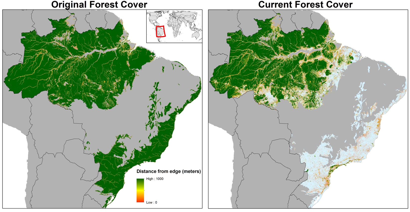 Worlds Forests Are Fragmenting Into Tiny Patches And Risking Mass