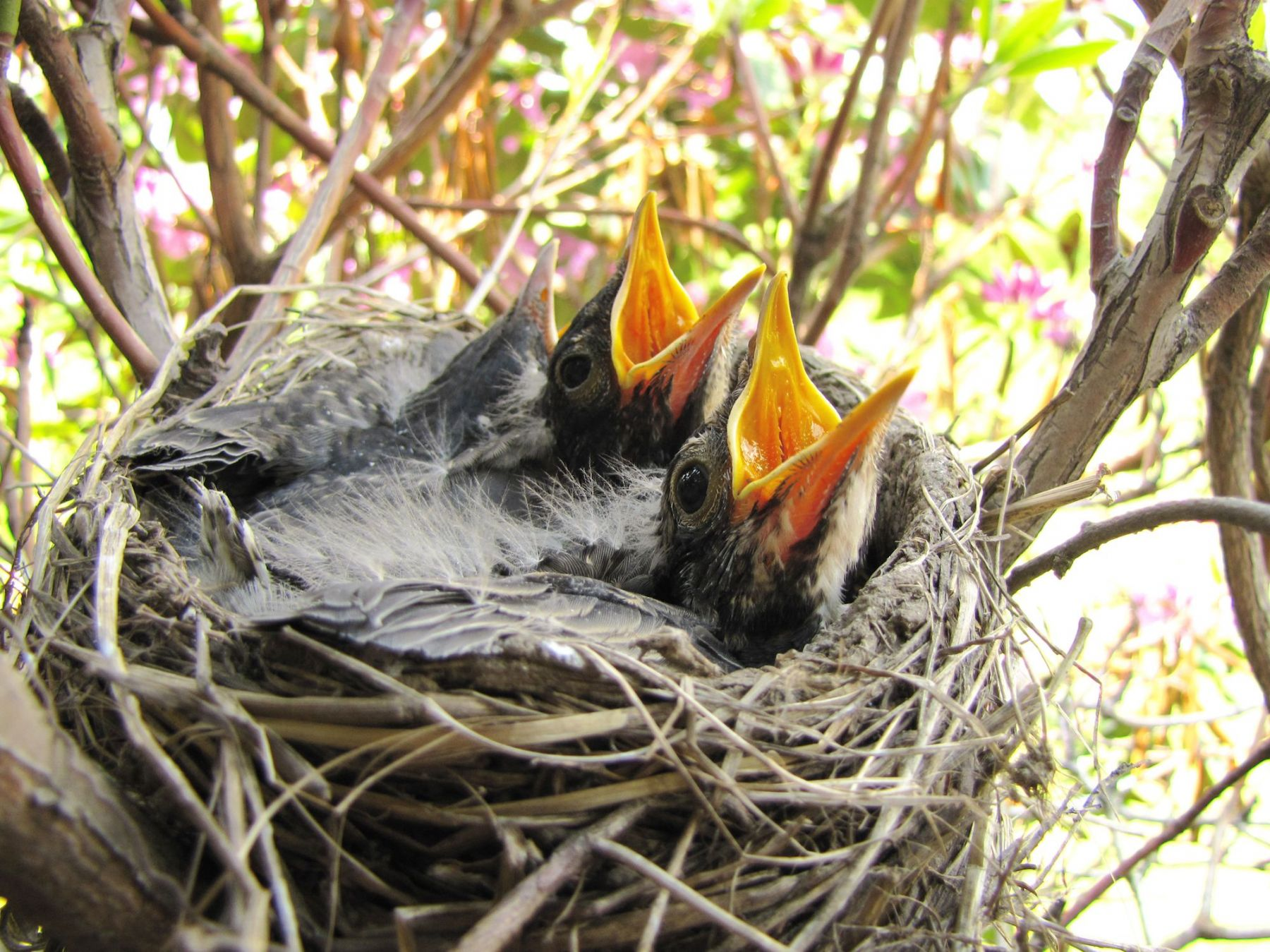 Spring baby animals are easy prey for outdoor pets