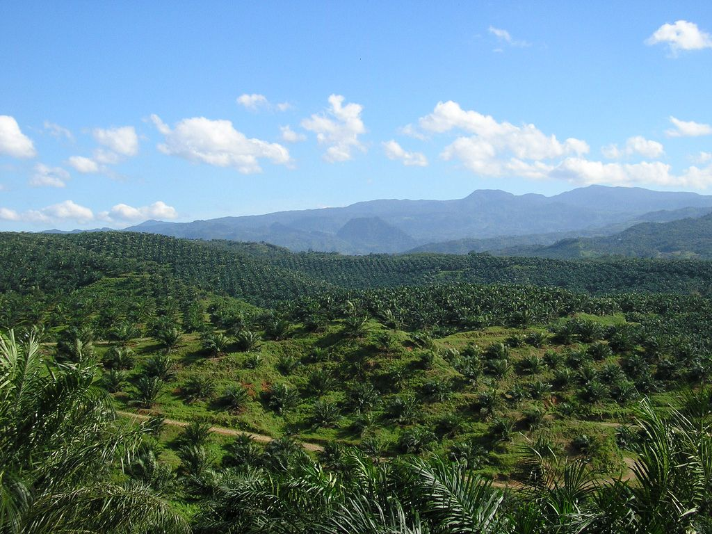 Why you should avoid palm oil at all costs