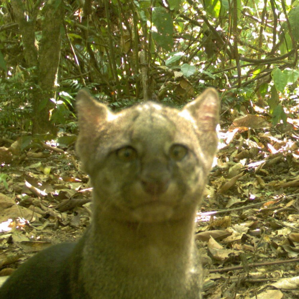 10 funny animal photos captured by camera traps