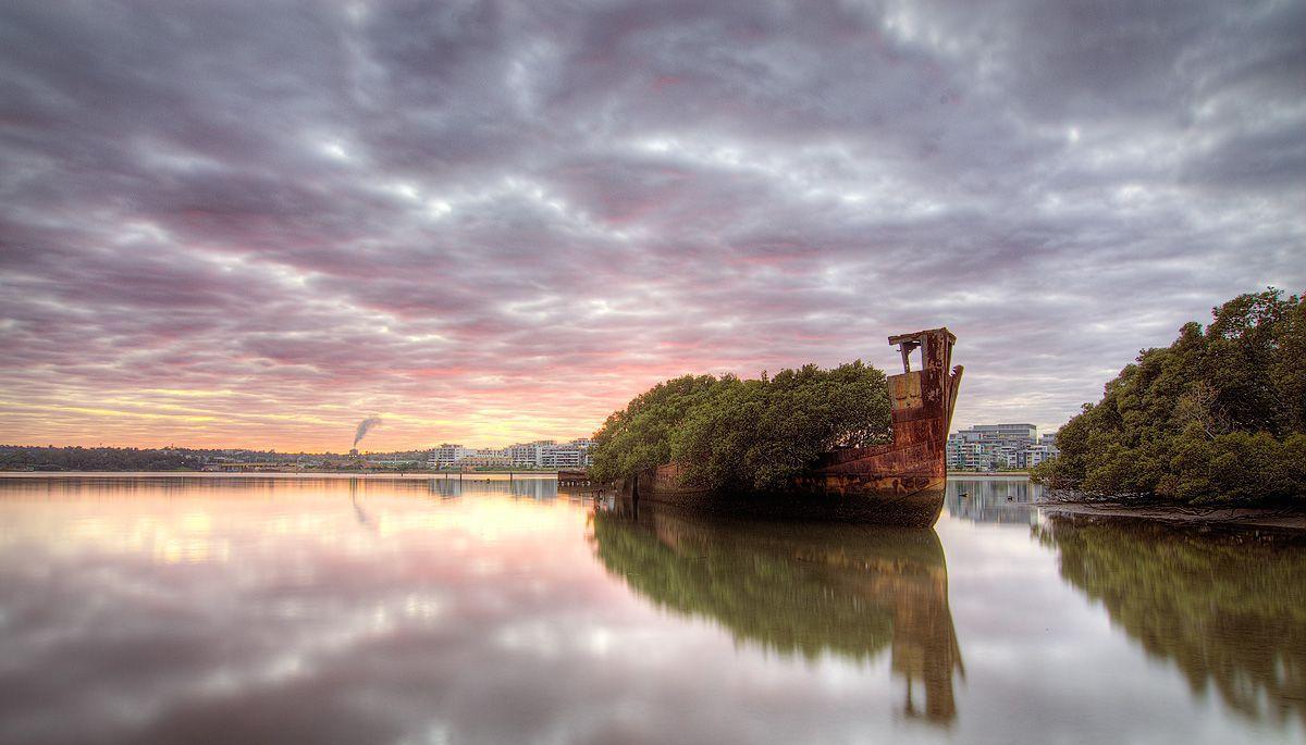 Shipwreck floating forest sydney australia