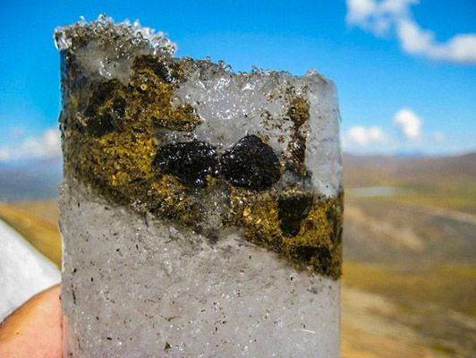 700-year-old frozen virus revived from frozen caribou poop