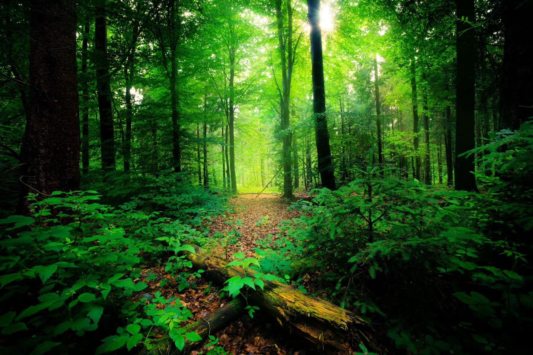 India plans to spend 6 billion on creating new forests
