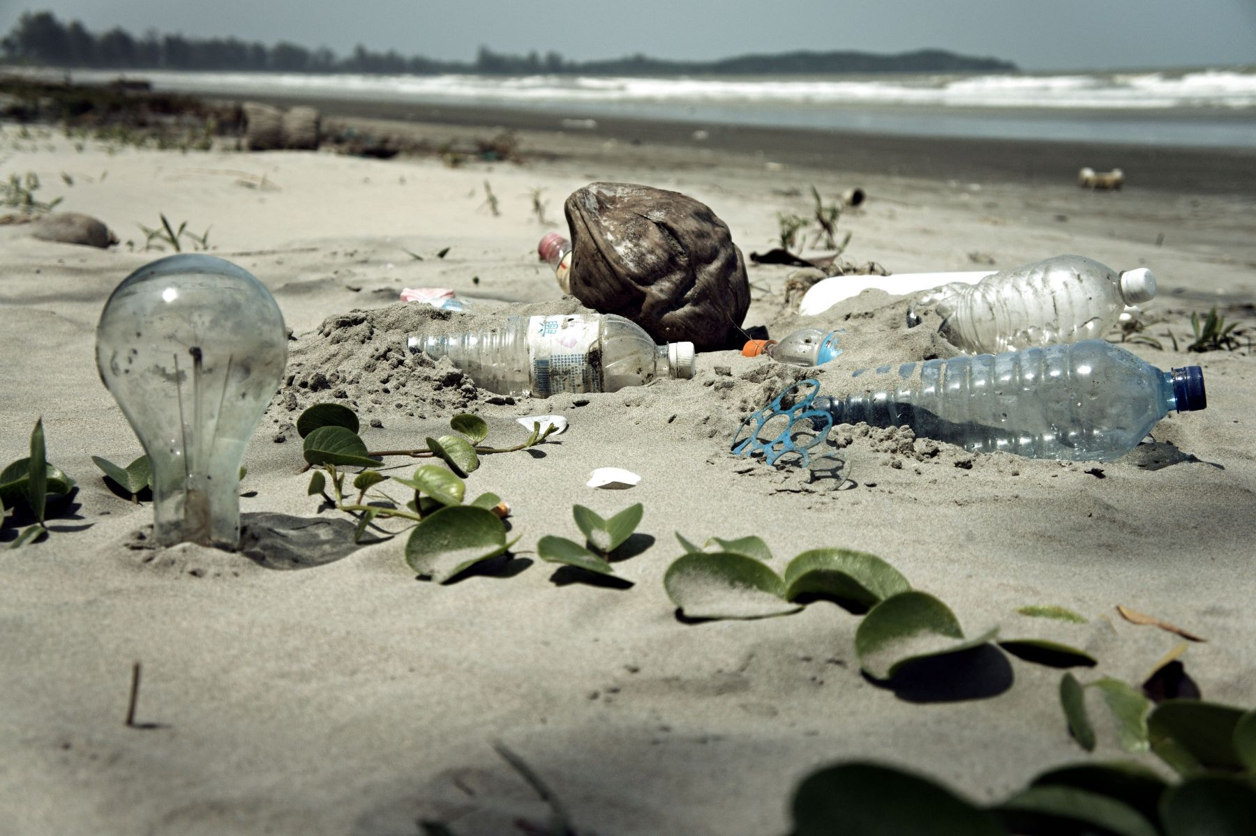 Plastic-eating bacteria could solve the problem of plastic pollution