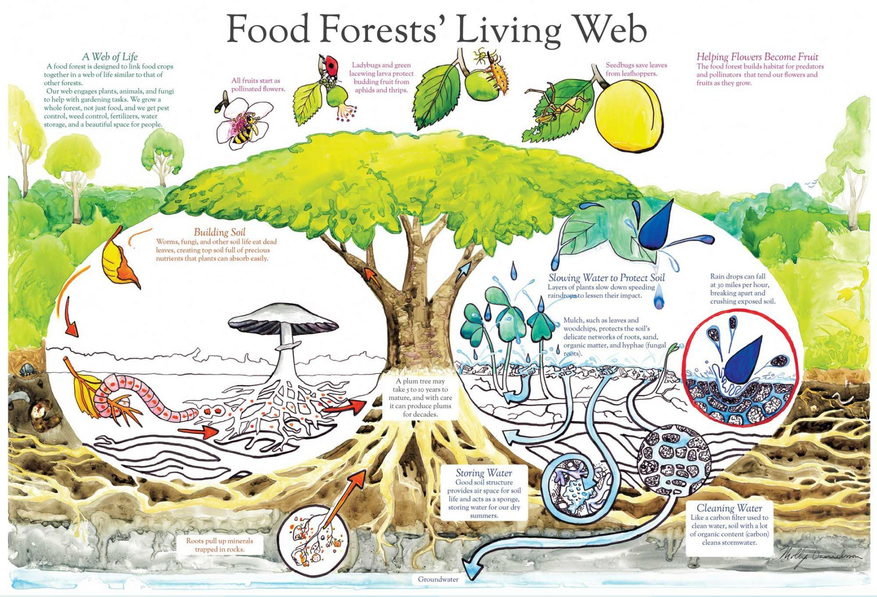 Design Templates For Creating Your Own Food Forest