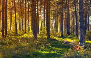 For a long time trees were seen only as a commodity in the forest but recent research has shown that ...