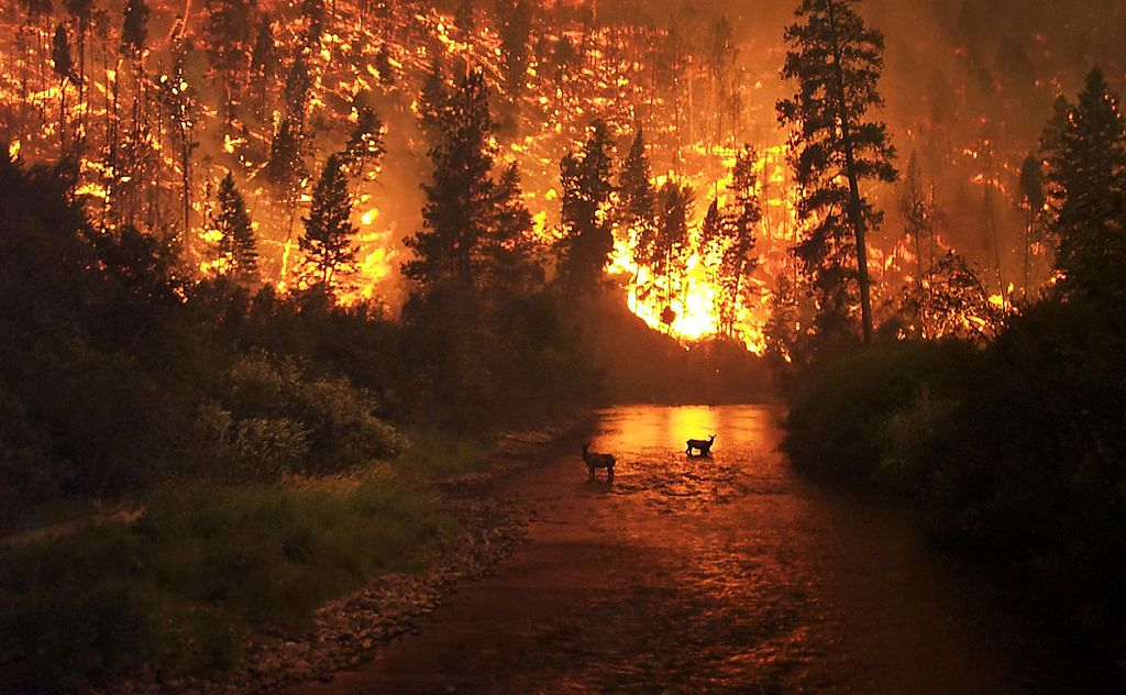 Reasons for letting wildfires burn