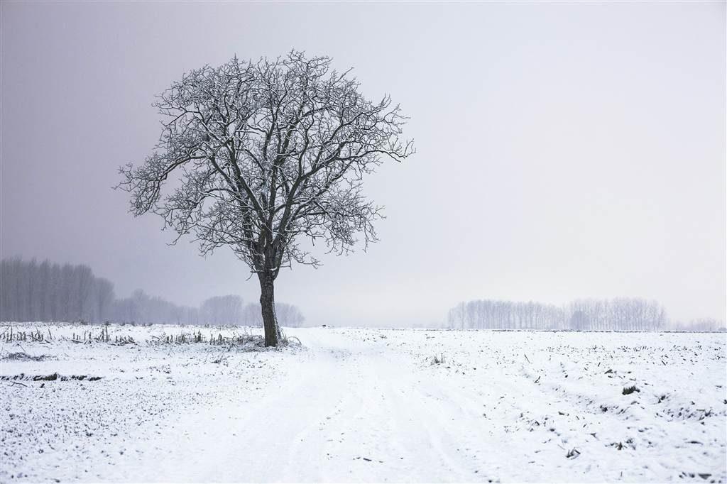 coldtree