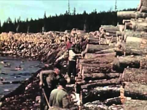 Amazing scenes of logging, stacking, cutting and transport.