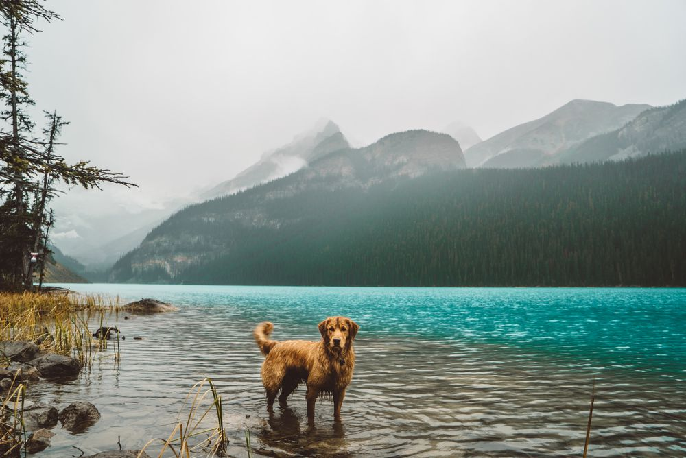 Aspen loves to swim. Moraine lake (Lake Louise, Alberta) | © Hunter Lawrence