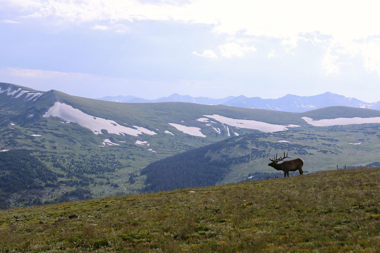 Lake Haiya moose nature hunter