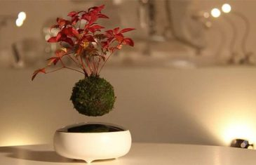 Now you can create your own 'Air Bonsai', that appears to magically float above its base. Made from a handcrafted ...