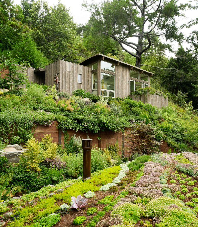 Jonathan Feldman green roof forest cottage
