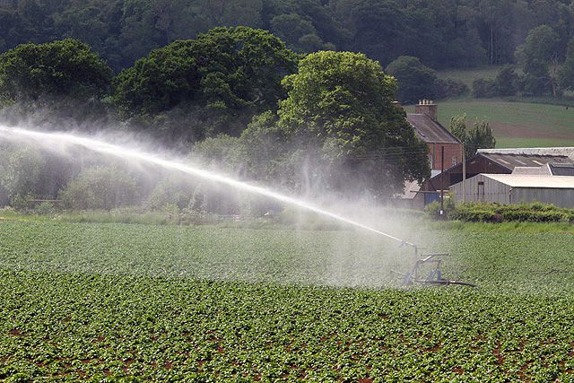 Irrigating crops with wastewater exposes us to pharmaceutical drugs