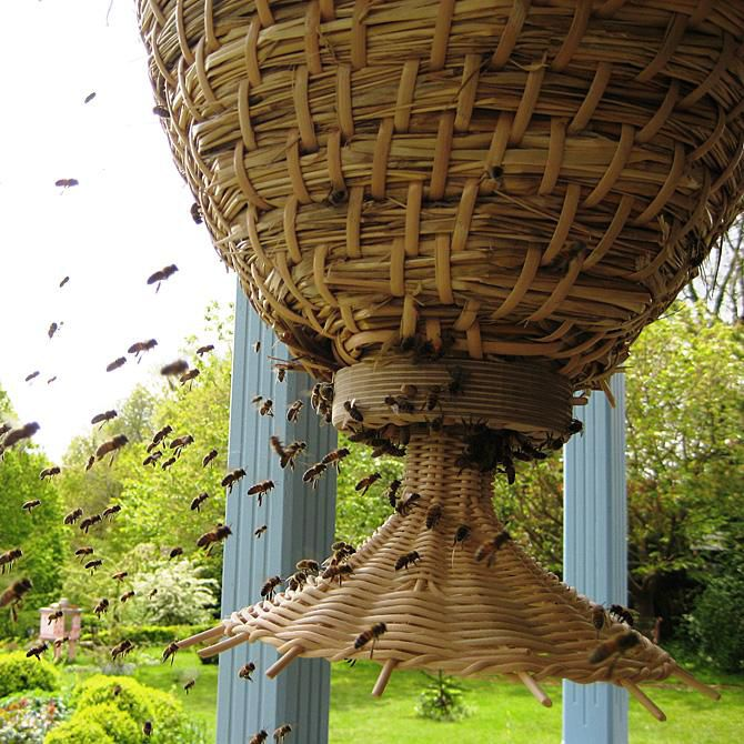 The Sun Hive is a bee-friendly hive centered around natural hive geometry and a natural approach to modern beekeeping. The ...