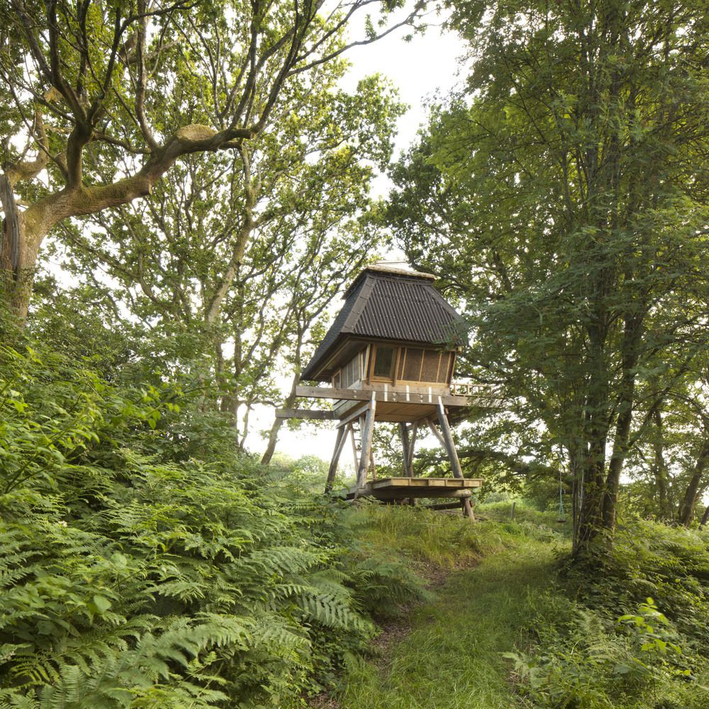 treehouse / hut stands among oak trees in Dorset, England