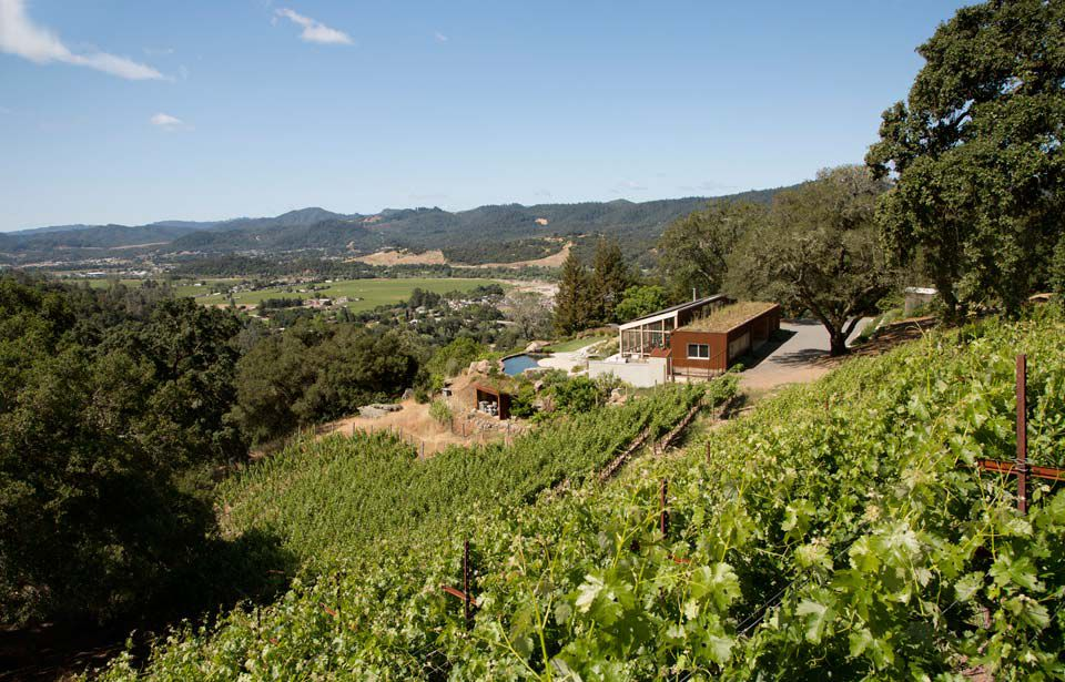 modern wooden vineyard house with green roof