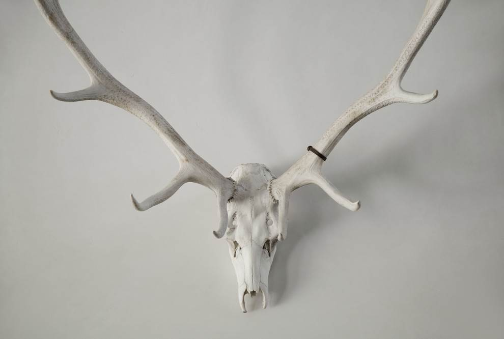 white horn on the white wall