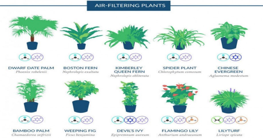 NASA Reveals A List Of The Best Air-Cleaning / Air-Filtering HousePlants For Your Home.