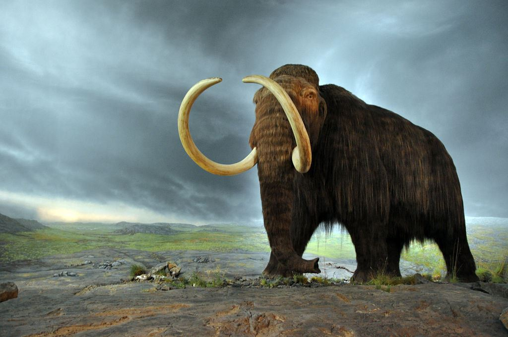 Russian and South Korean scientists have signed a deal on joint research intended to recreate a woolly mammoth, an animal ...