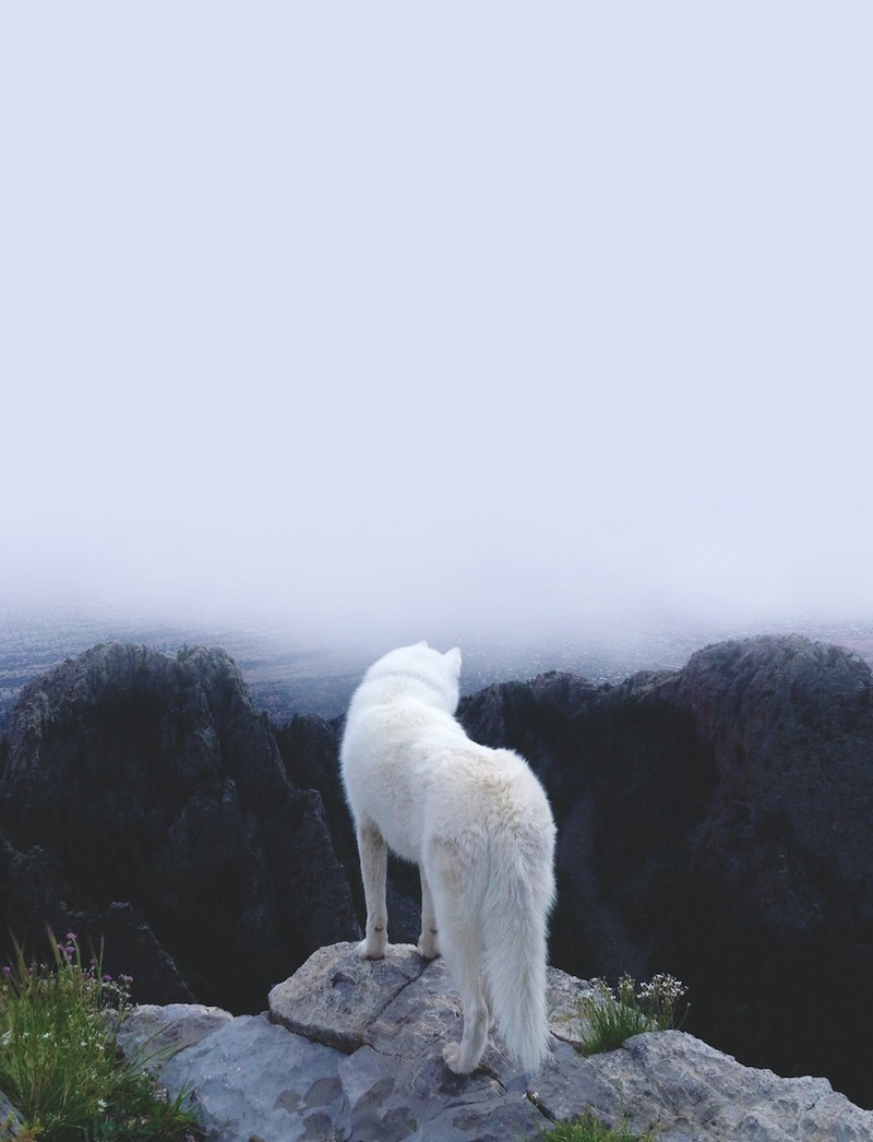 John and Wolf, wolf, fog, photo, nature, animals, landscape, Jon Snow, Game of Thrones, Ghost, direwolf