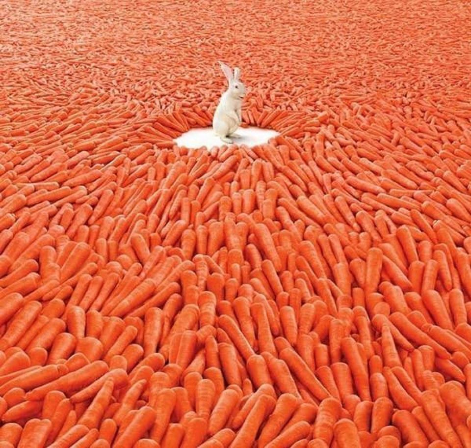 carrots, carrot, baby-cut carrots, facts, interesting, woodz, angry farmer, angry person, rabbit, lie, bunny