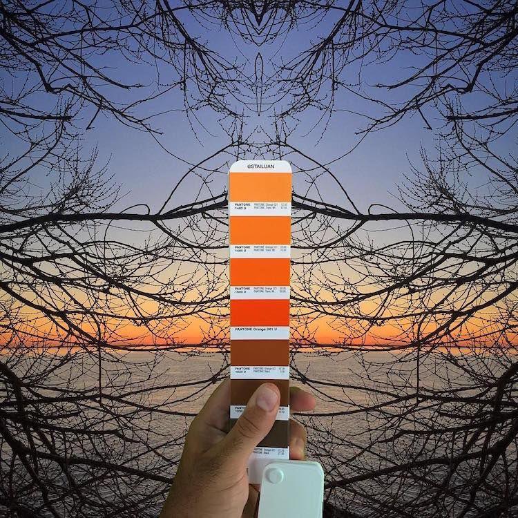 Sunset, Pantone Colour Swatches, designer, photography, tree