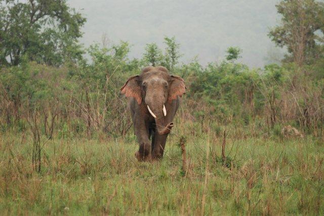 Elephant, hunter, stampedo, woodz, woodz.co, death, animal hunting, elephant hunting, Nambia, tragic