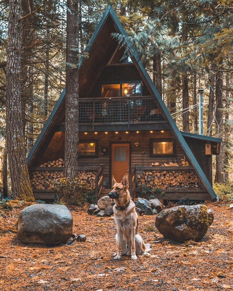 Cabin in the woods, dog, lumber