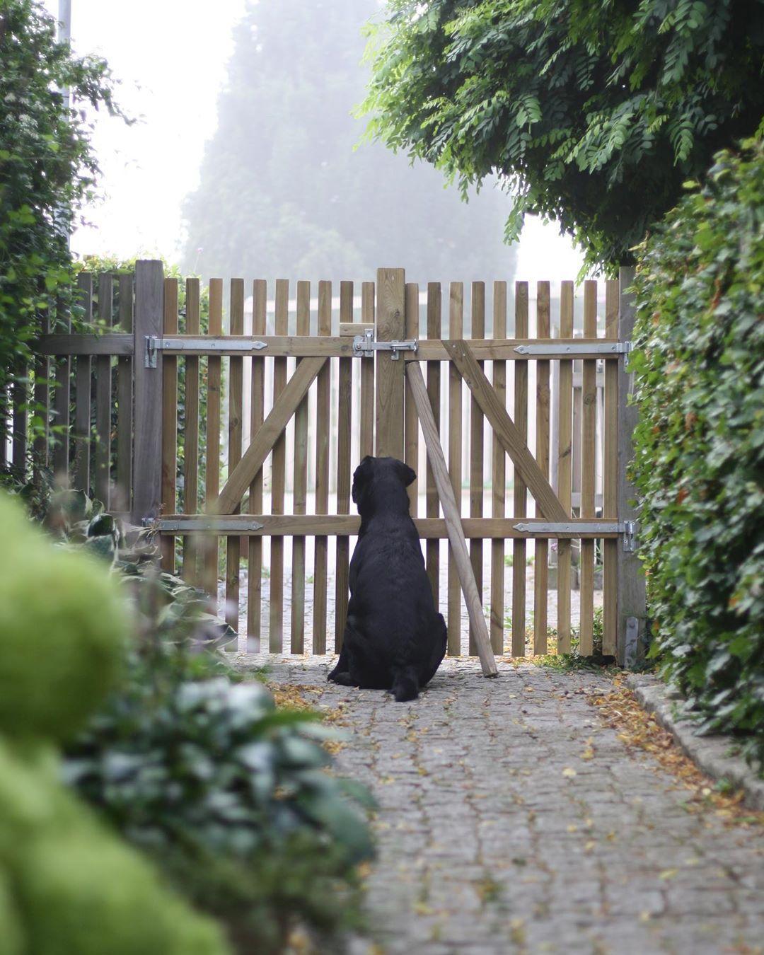 wood fence, garden ideas